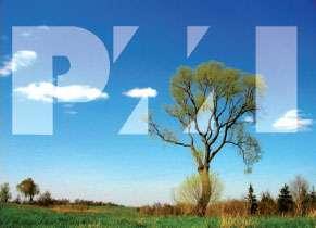 PMP CAMP PMI Erkan Okur